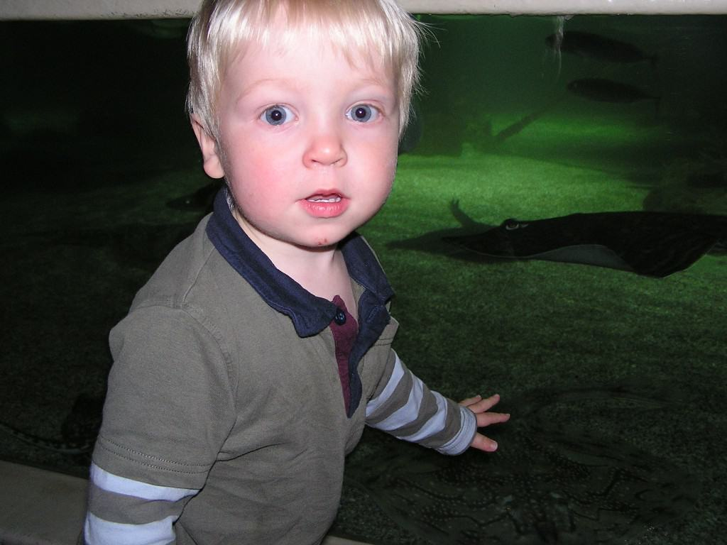 Hunstanton Sea Life Sanctuary – Review and Competition
