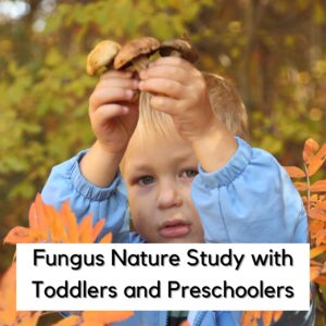 Toadstool and Mushroom Hunt for Toddlers