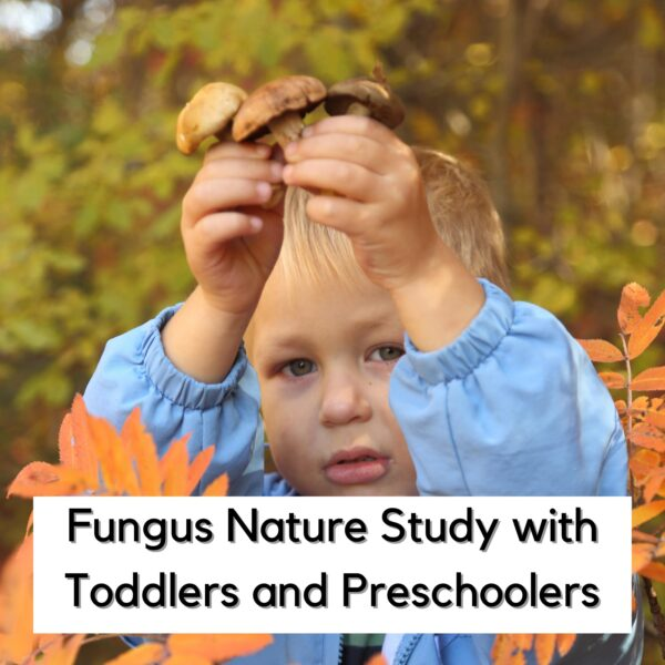 toddler holding some mushrooms in their hands in the autumn leaves text on the image reads Fungus Nature Study with Toddlers and Preschoolers