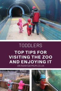 toddlers top tips for visiting the zoo with your tots and enjoying it