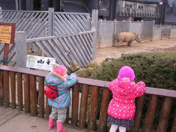 toddlers watching the animals at the zoo