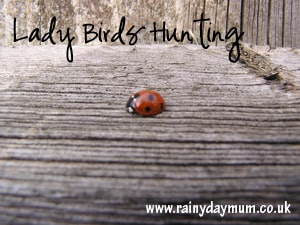 Lady Bug Hunt