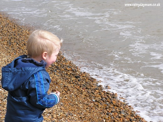 Exploring Outdoors – Seals, shells and star fish