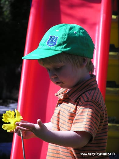 Toddler Science – Exploring plants