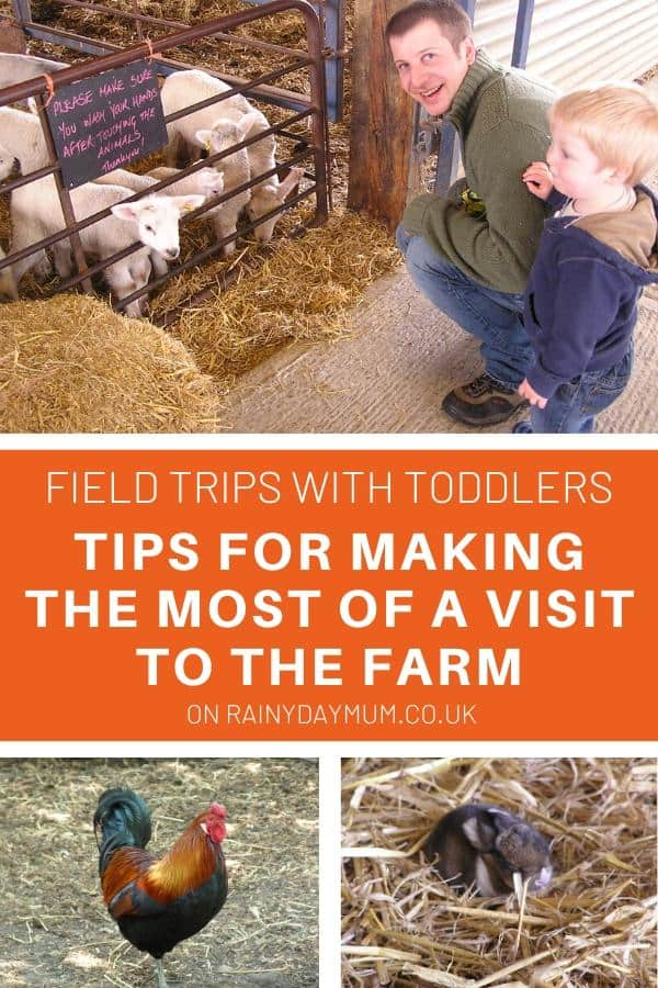 field trips with toddlers top tips for visiting the farm