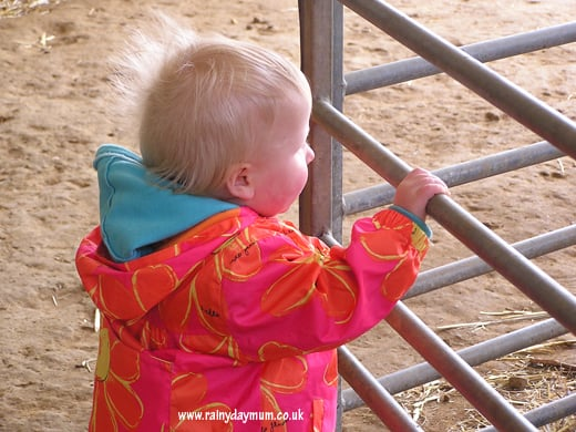 Toddler field trip to the farm