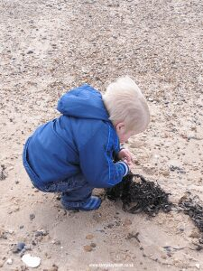 beach combing - sea weed finds