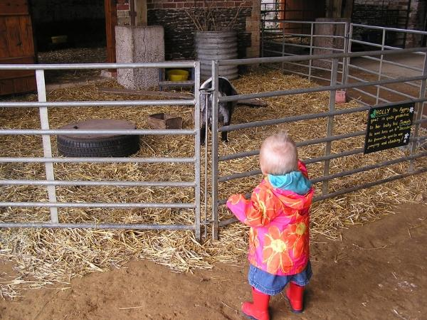 toddler exploring a farm for the first time