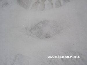deer prints in the snow