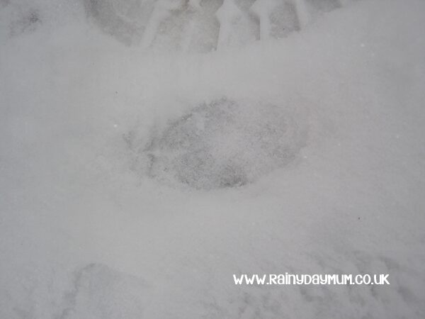 deer prints in the snow