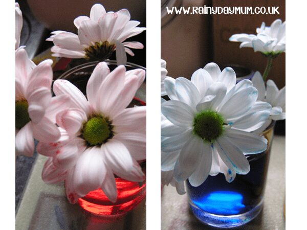 Science at home - plant transpiration