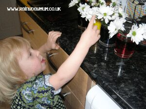 transpiration experiment for kids