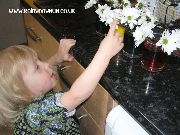 transpiration experiment for kids