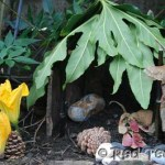 Fairy and Elf homes one of the 7 days of Nature Crafts by Red Ted Art over on Rainy Day Mum