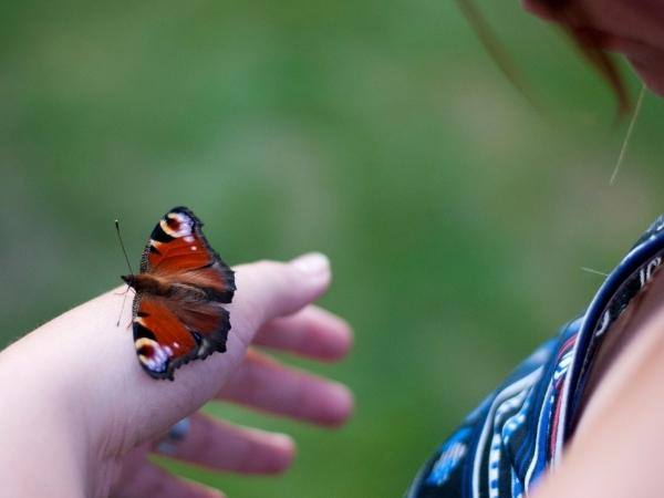 hand of a girl with a peacock butterfly resting on it with a blurred green background behind