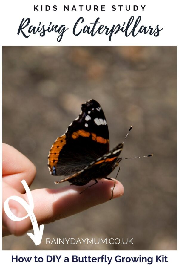 Pinnable image on Raising Caterpillars with a butterfly opening wings on a childs hand