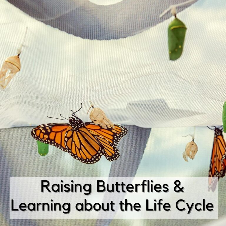 Learning about The Butterfly Life Cycle, Raising Caterpillars, Activities, Resources and Crafts for Kids