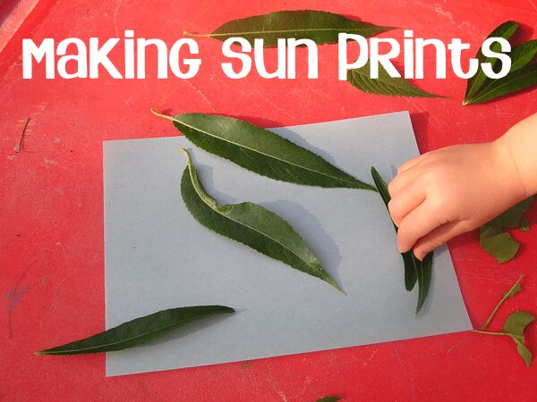 Bringing Foggy Foggy Forrest alive by creating our own foggy foggy forest pictures with solar paper