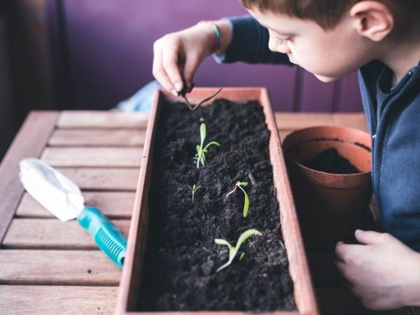 child picking out seedlings from a seed tray on a wooden bench
