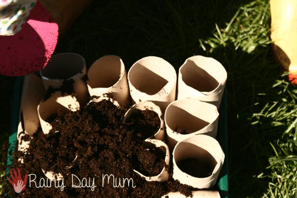 filling up cardboard tube seedling pots with seed compost to plant some seeds.
