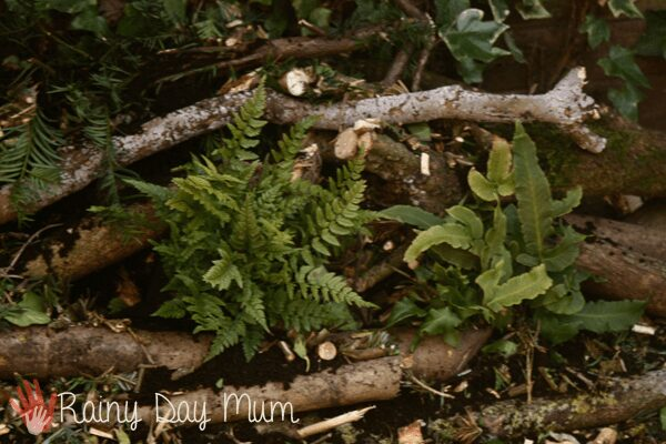 build a log pile home for small garden animals