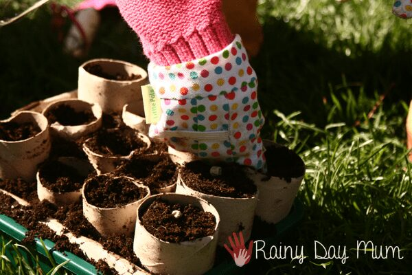 child pushing pea seeds into tube seed pots that she's helped make
