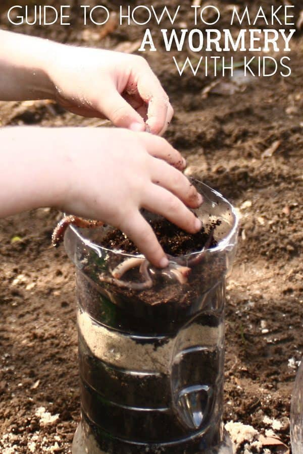 Guide to making a wormery for the KS 2 Classroom out of a plastic bottle