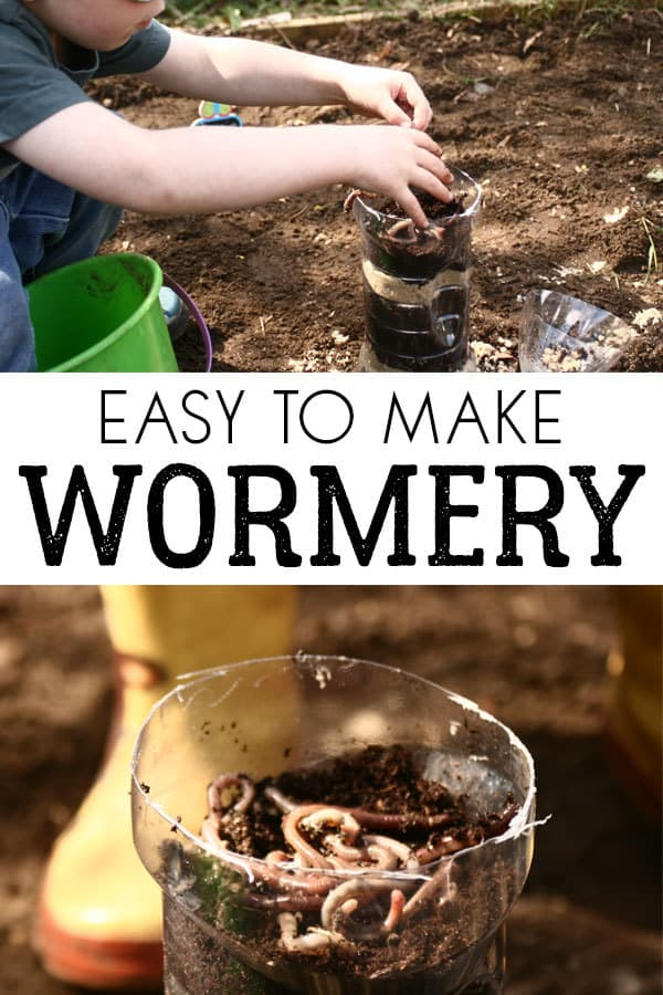 A simple how to make wormery from a plastic drinks bottle to help children understand what worms do. Ideal for home or classroom to explore habitats.