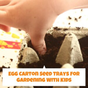 Easy Egg Carton Seed Trays to grow seeds at home indoors with kids