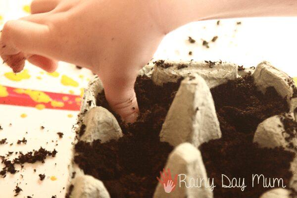 pressing peas into the soil in an egg carton
