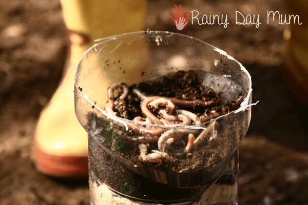 worm on top of the soil in a plastic bottle wormery made from kids