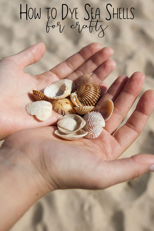 Picture of sea shells in hands to take home and dye for kids crafts