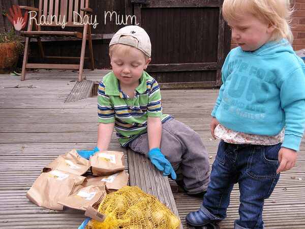 toddler and preschooler looking at spring bulbs to plant in November to grow a rainbow for next spring