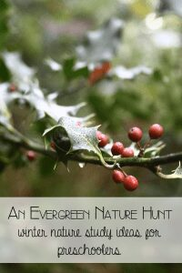 An evergreen nature hunt - take a winter nature study trip with preschoolers looking for evergreen trees