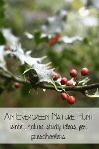 An Evergreen Nature Hunt