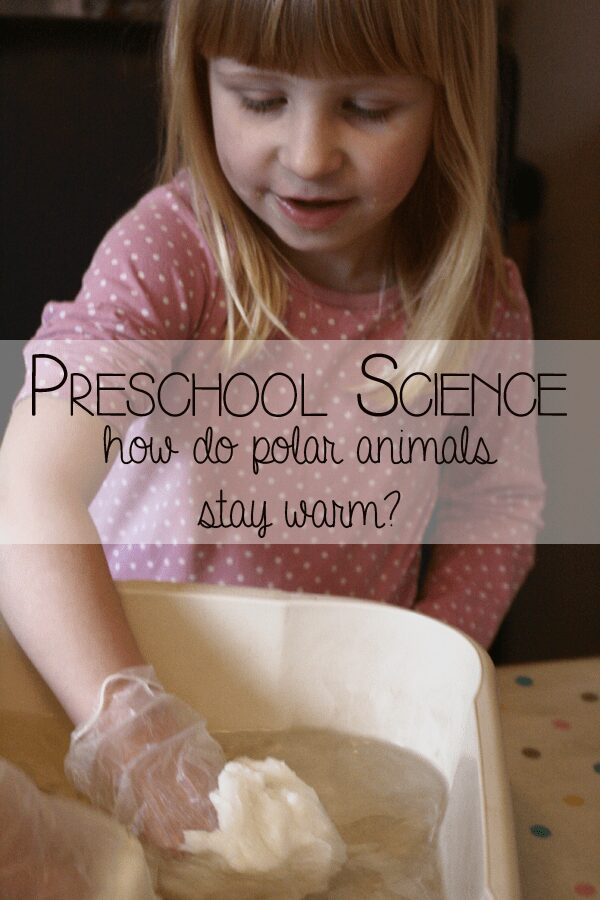 Preschool Science - investigation how polar animals stay warm