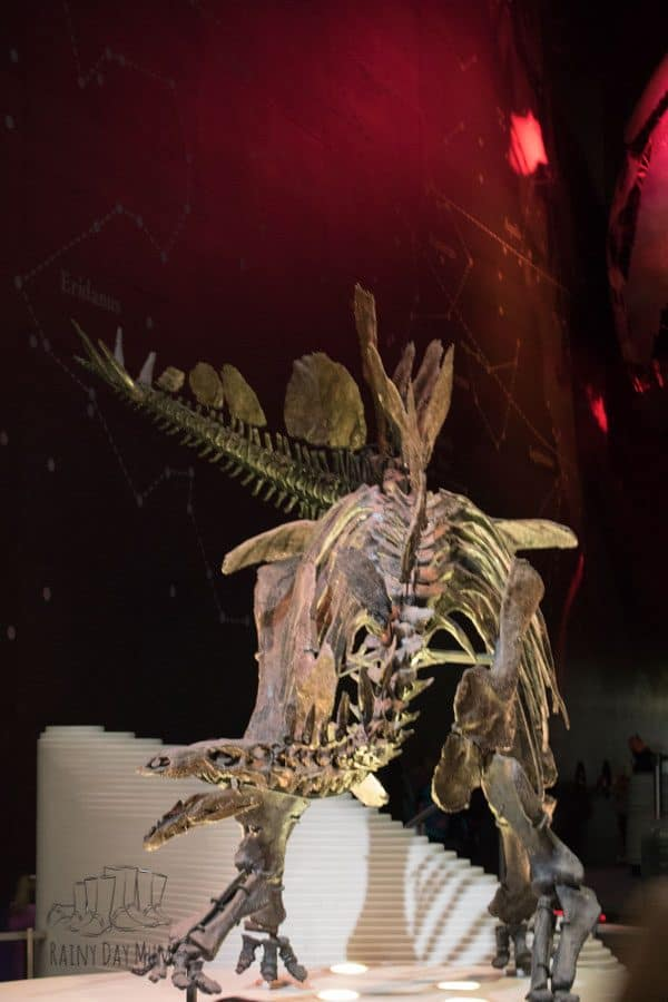 Stegosaurs Fossil in the Natural History Museum London