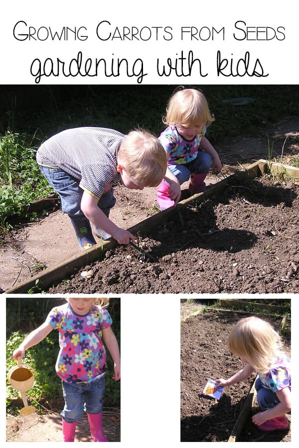 Growing Carrots from Seeds