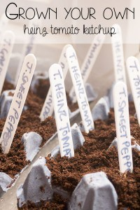 Growing Heinz Tomato Ketchup – Getting Started