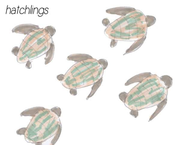 Sea Turtle Life Cycle - Ordering Cards to print and download