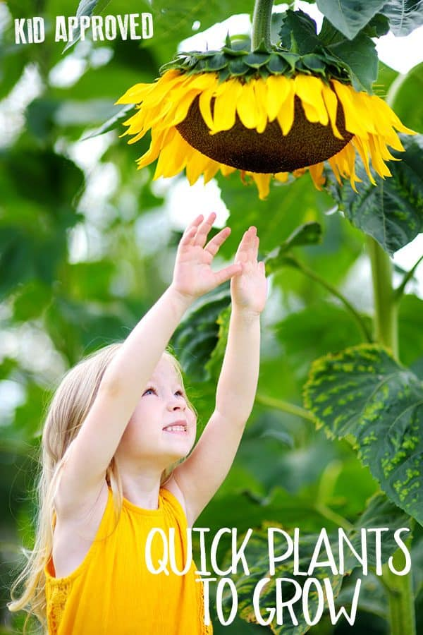 Quick growing seeds and plants ideal for gardening with kids. These fast growing plants are perfect for at home or in the classroom.