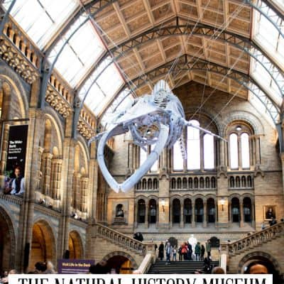 Guide To Visiting the Natural History Museum London with Kids