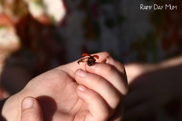 Help attract ladybugs to your garden with these plants that are easily to grow and they love. Perfect for the kids to help plant