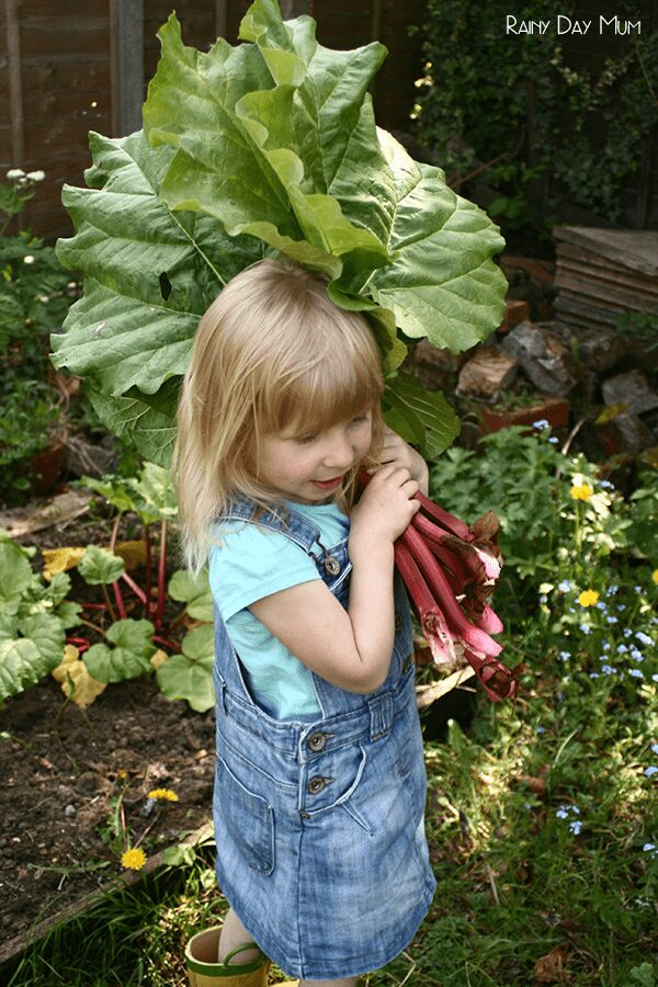 older toddler harvesting rhubarb from the garden
