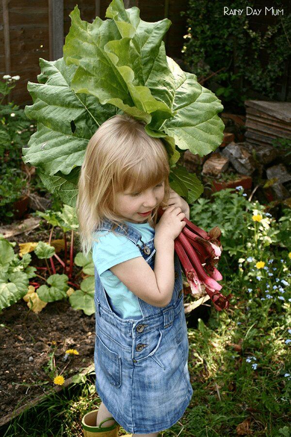 Rhubarb Crumble Recipe - cooking with kids seasonal food