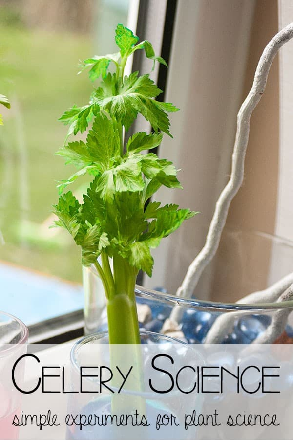 Celery Science – exploring Plants