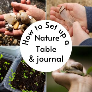 collage of simple nature finds and activities that you can add to a nature table or journal about with kids