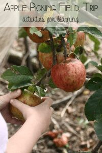 Apple Picking Field Trip Activities for Toddlers and Preschoolers