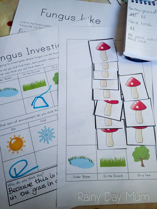 Fall STEM activity for early years - Investigating Fungus and where they can be found including FREE Printable to support the activity