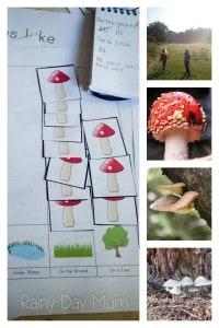 Fungus Investigation